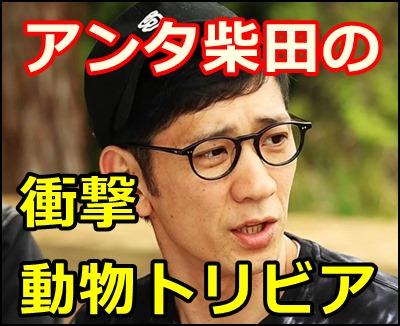 アンタッチャブル柴田の天才的にすごい動物知識、衝撃のBEST7紹介!
